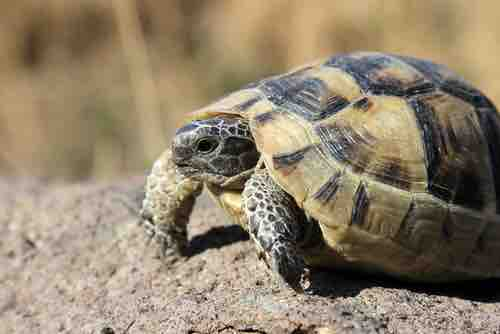 They Will Certainly Inform You All Concerning Luxuriant Box Turtle